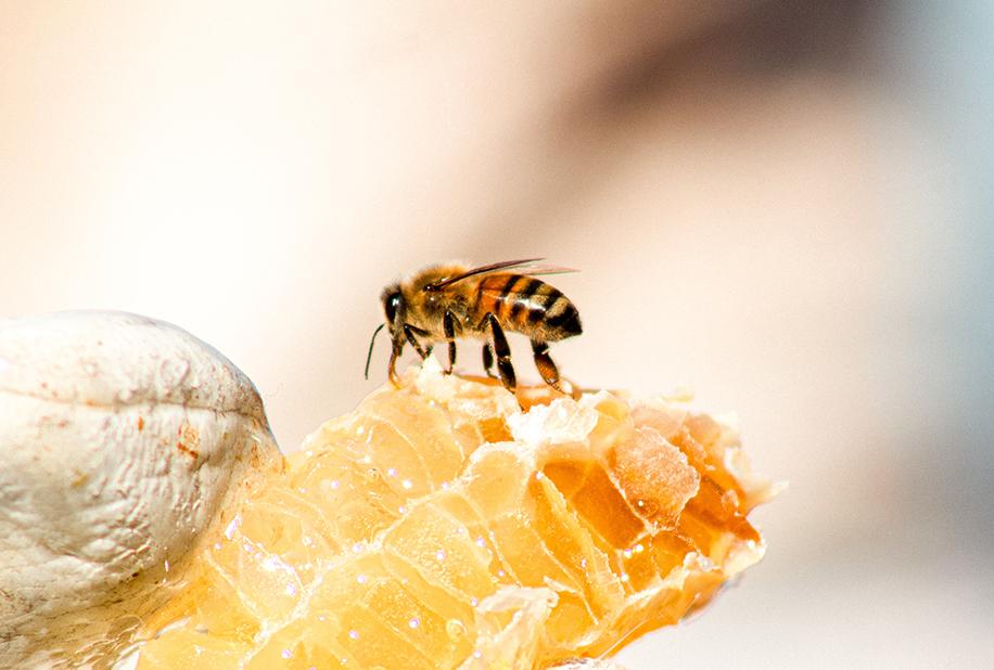 زنبور عaسل و شرایط تولید عسل طبیعی